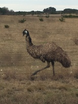 Yes, an emu!!